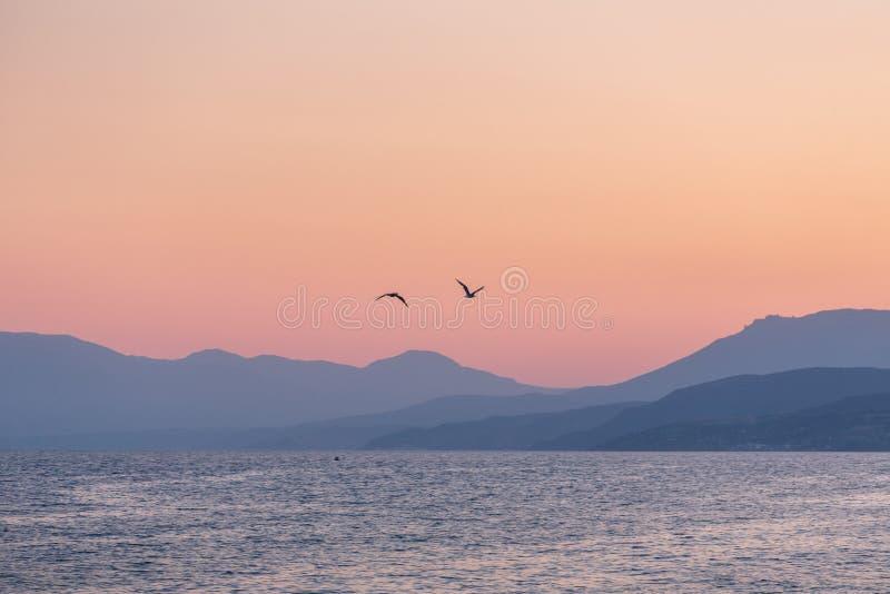 Due gabbiani sopra il mare al tramonto immagine stock