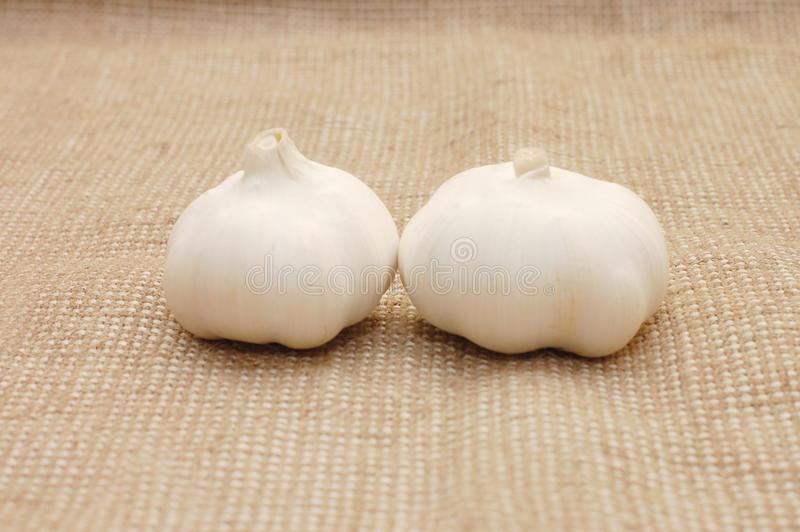 Due garofani bianchi di Garlick immagine stock libera da diritti