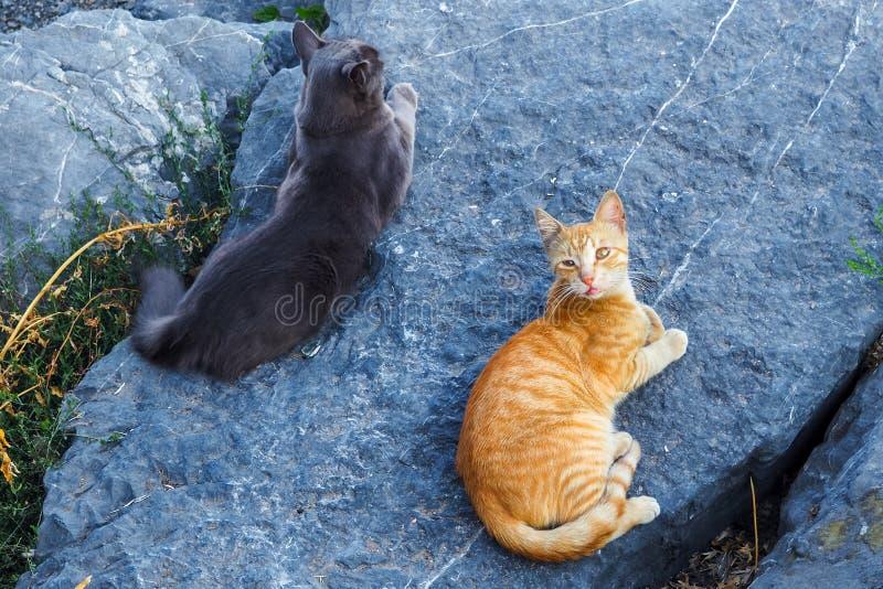 Due gatti che si trovano sulla pietra, vista superiore fotografia stock libera da diritti