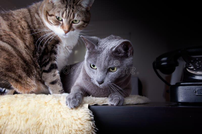 Due gatti con il telefono antico fotografie stock libere da diritti