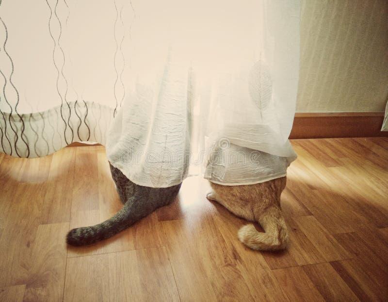 Due gatti del gattino gialli e gray che guarda fuori la finestra immagini stock