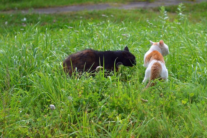 Due gatti della yarda scoprono la relazione immagine stock libera da diritti