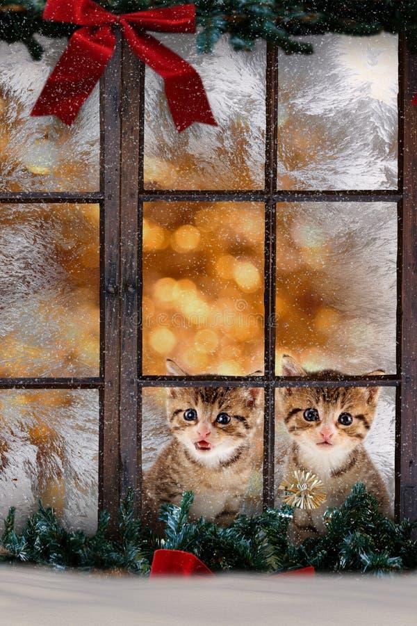 Due gatti/gattini che si siedono alla finestra con il decorati di Natale immagine stock