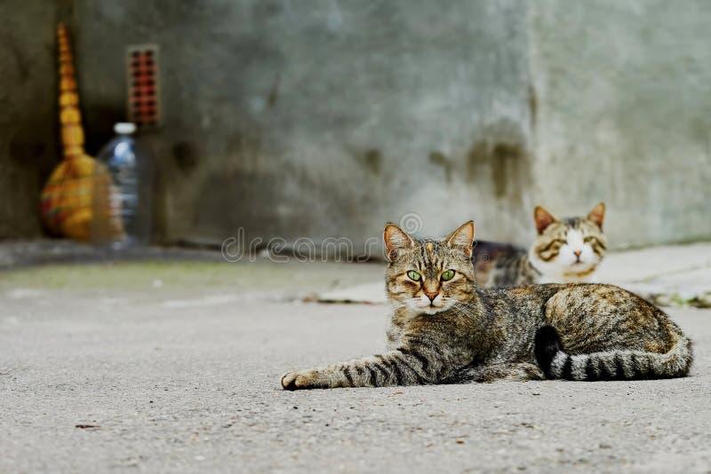 Download Due gatti senza tetto immagine stock. Immagine di vista - 56888275