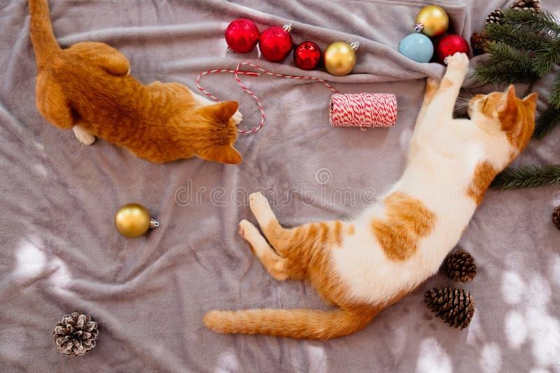 Due gattini arancio su tappeto nella festa di natale con la decorazione e l'ornamento immagini stock