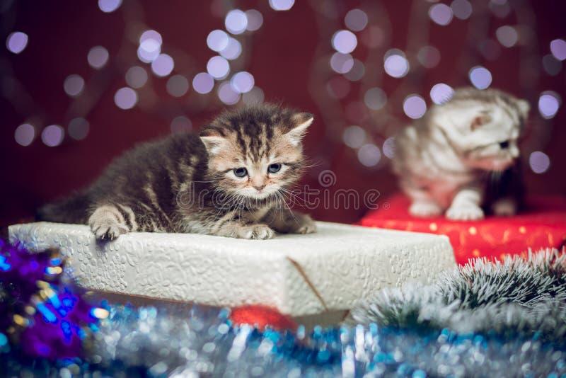Due gattini che si siedono sul contenitore di regalo di Natale immagini stock