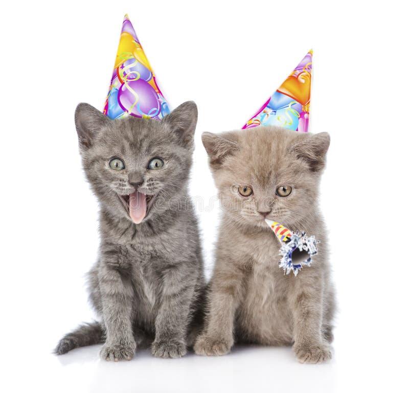 Due gattini divertenti con i cappelli di compleanno Isolato su priorità bassa bianca immagini stock