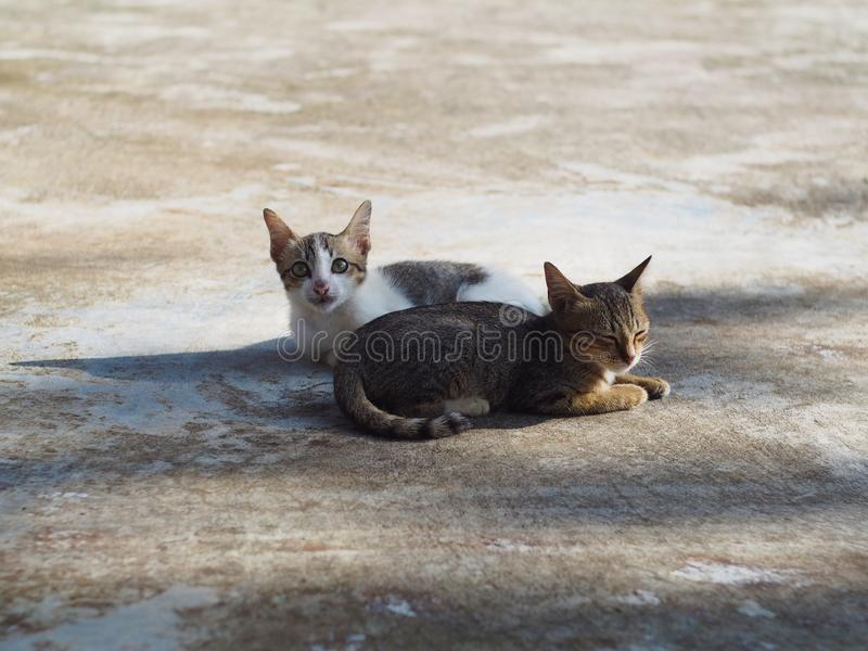 Due gattini, giovane gatto stanno rilassando sul pavimento immagini stock libere da diritti