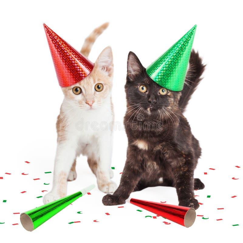 Due gattini svegli in cappelli del partito immagine stock libera da diritti