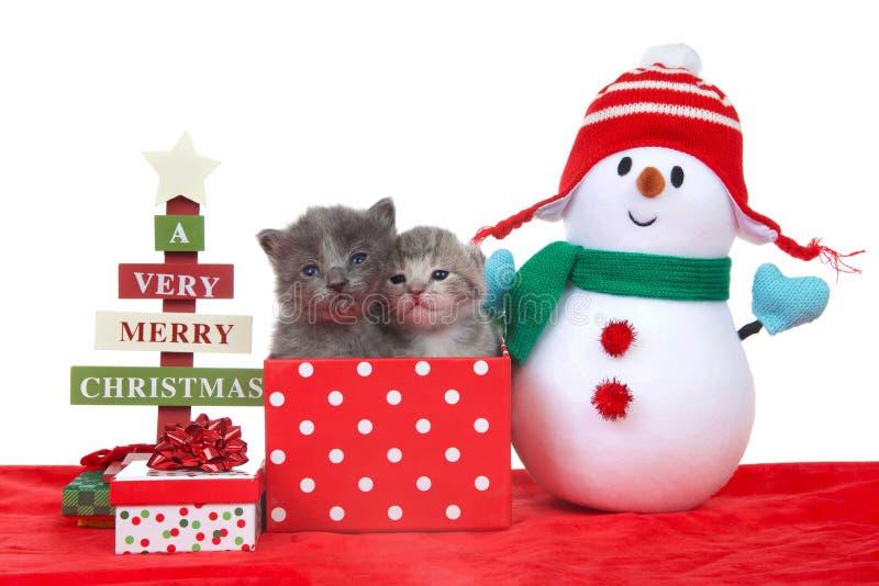 Due gattini in un regalo di Natale con il pupazzo di neve immagini stock