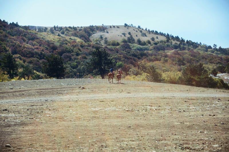 Due genti a cavallo guidano verso la foresta su un plateau della montagna immagine stock libera da diritti