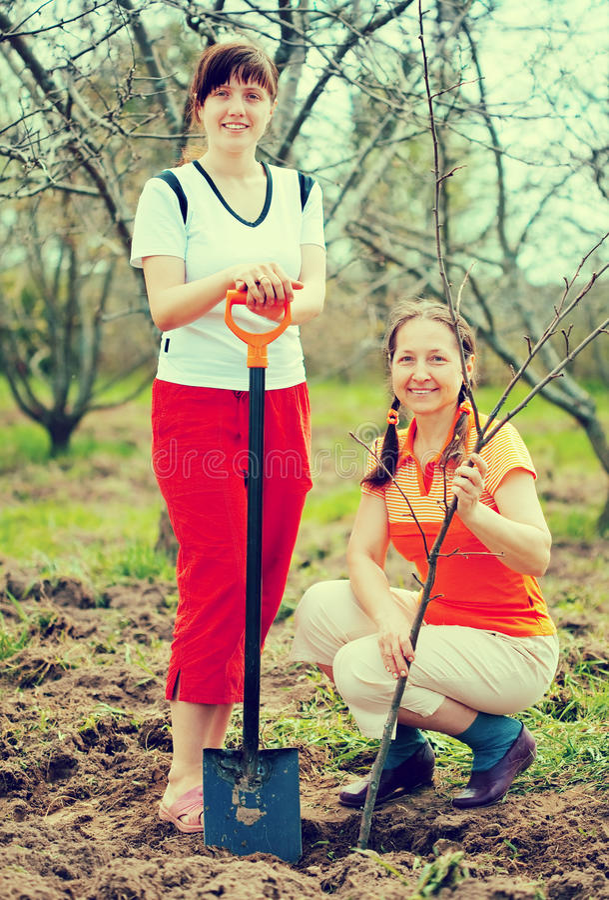 Due giardinieri che piantano albero fotografia stock libera da diritti