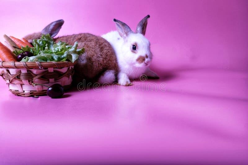 Due giovani conigli, marroni e bianchi, vicino alla frutta ed alle verdure immagini stock