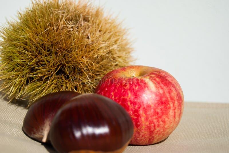 Due grandi castagne con l'istrice ed una poca mela rossa fotografia stock