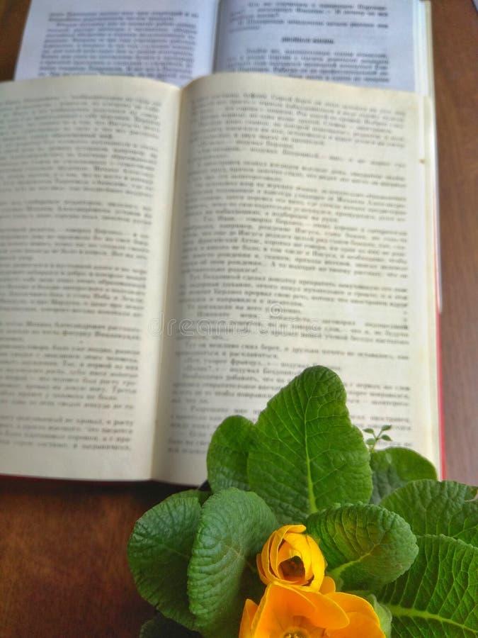 Due libri aperti e un fiore giallo in un vaso vicino sulla tavola nella luce del giorno immagini stock libere da diritti