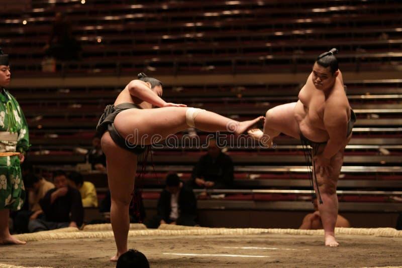 Due lottatori di sumo che ottengono pronti per una lotta