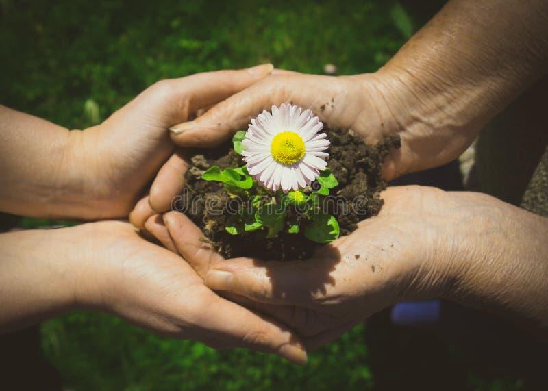 Due mani che tengono fiore immagini stock libere da diritti