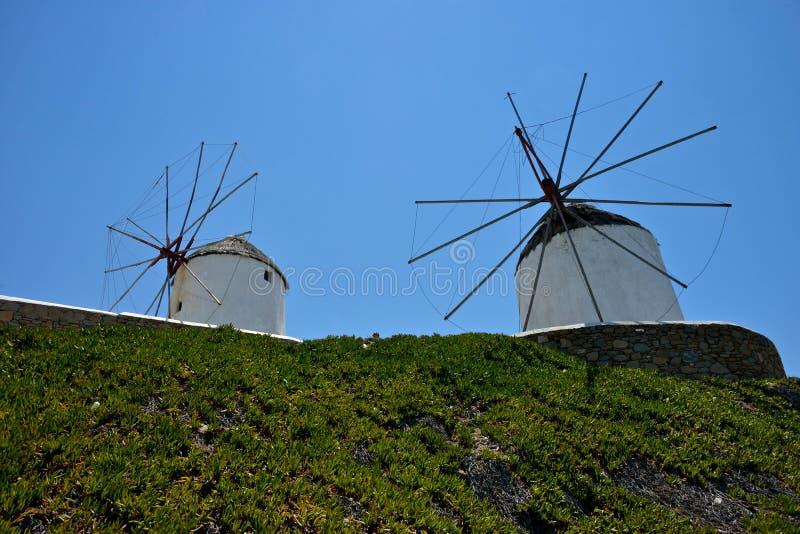 Due mulini a vento bianchi e un tappeto verde delle piante grasse immagine stock libera da diritti