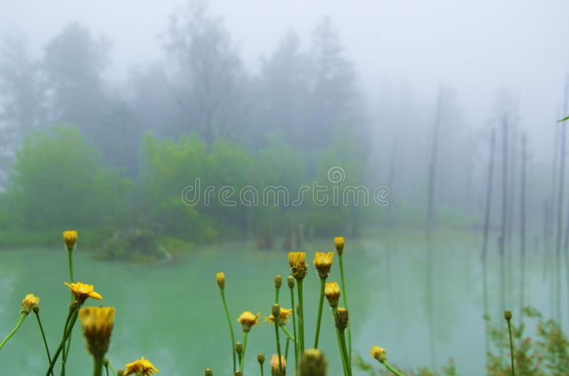 Due nature verdi e gialle di colori, immagini stock libere da diritti