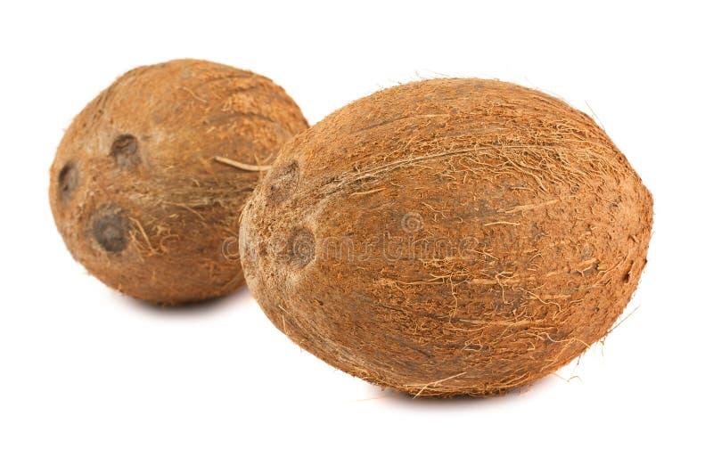 Due noci di cocco mature immagine stock libera da diritti