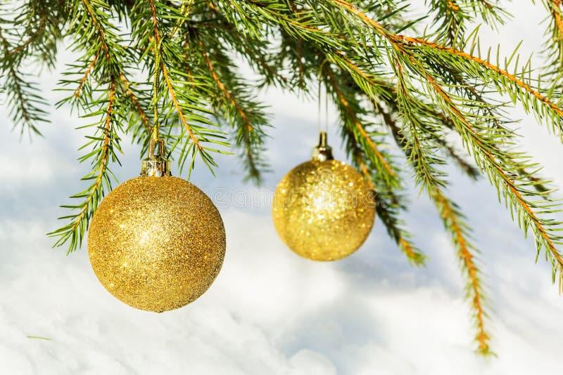 Due palle dorate di Natale sul ramo attillato immagine stock