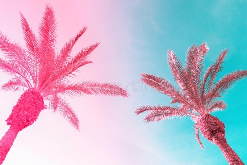 Due palme alte sul cielo blu tonificato di rosa di pendenza con le nuvole lanuginose leggere Fondo tropicale di estate d'avanguar immagine stock libera da diritti