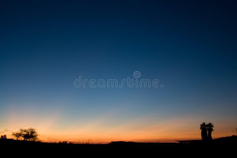Due palme distanti del deserto fotografia stock