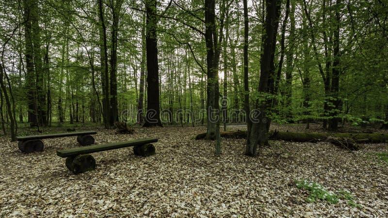Due panche di legno vuote fotografie stock