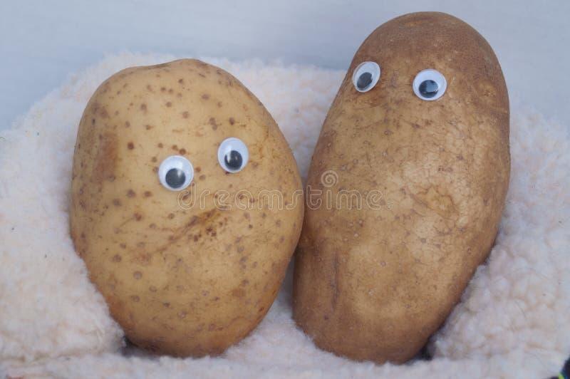 Due patate di strato fotografia stock libera da diritti