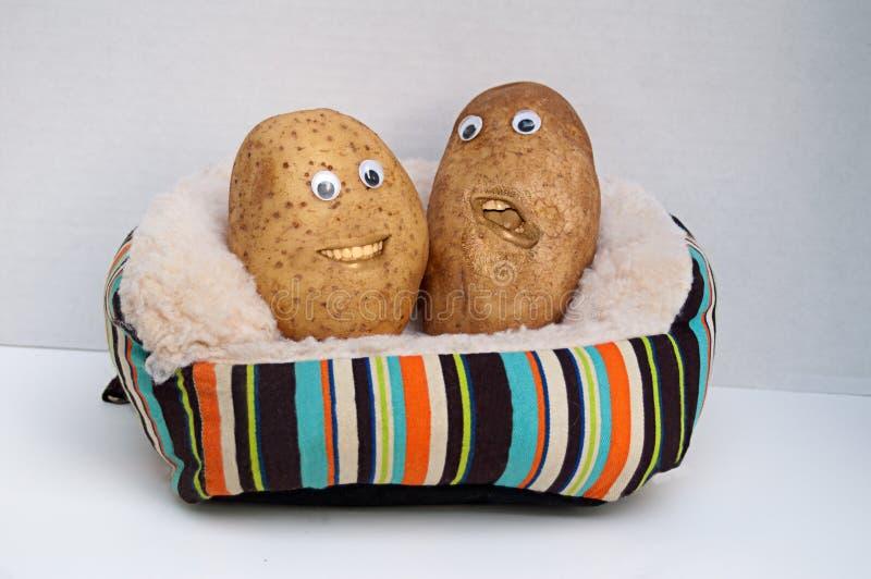 Due patate di strato felici fotografia stock libera da diritti