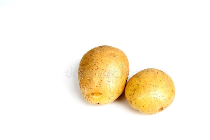 Due patate su un fondo bianco immagine stock libera da diritti