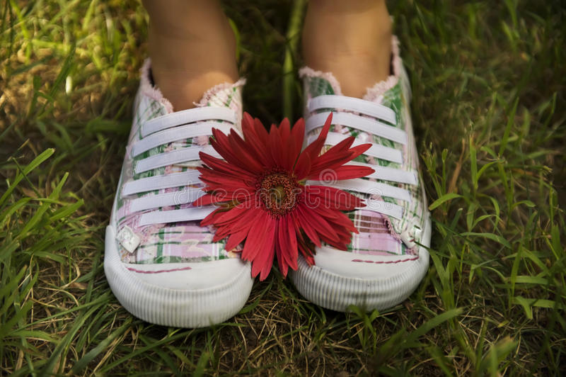 Due pattini e un fiore immagini stock