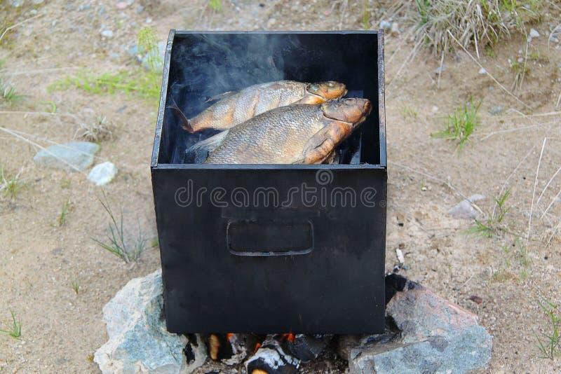 Due pesci di acqua dolce nell'affumicatoio del metallo Bei ambiti di provenienza della natura fotografie stock