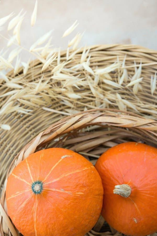 Due piccole zucche arancio luminose di Heilroom in canestro di vimini asciugano Autumn Plants sulla Tabella del rattan sul terraz immagine stock libera da diritti