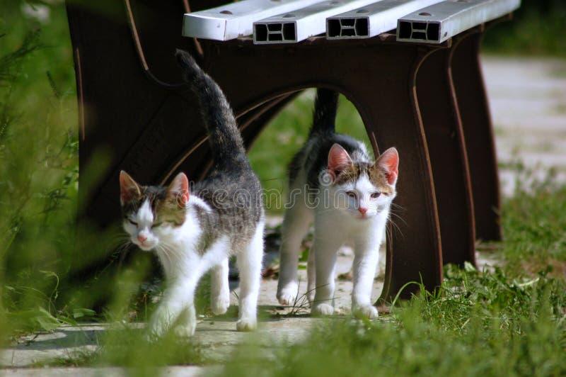 Due piccoli gatti fotografia stock