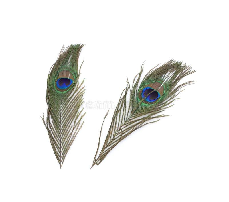 Due piume del pavone. fotografia stock libera da diritti