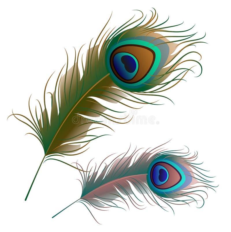Due piume del pavone isolate su fondo bianco illustrazione vettoriale