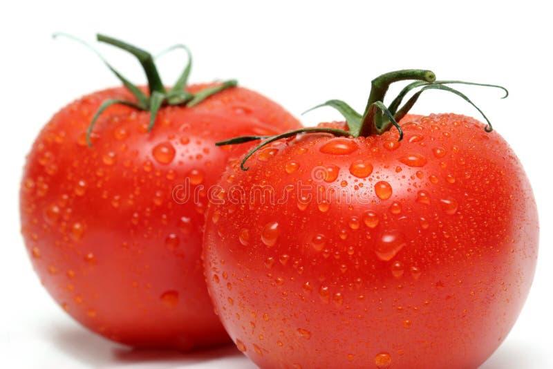 Download Due Pomodori Della Vite A Macroistruzione Fotografia Stock - Immagine di isolato, alimento: 202878