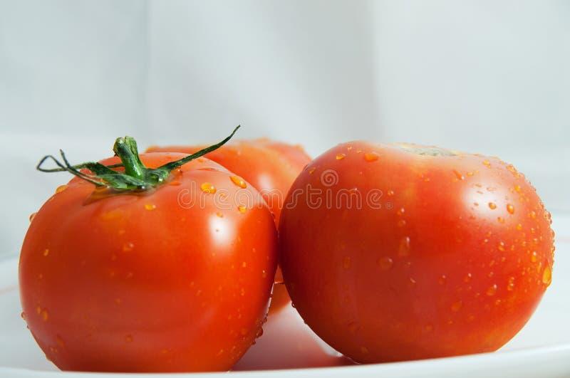Due pomodori freschi fotografia stock libera da diritti