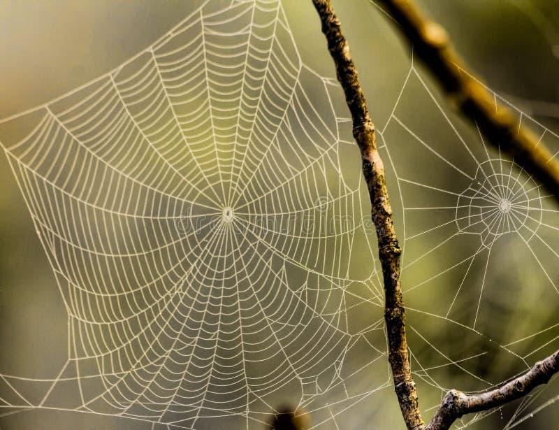 Due ragnatele accese da luce solare fotografia stock libera da diritti