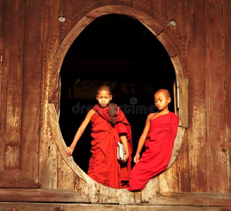 Due rane pescarici che riflettono, Myanmar (Birmania) immagini stock libere da diritti