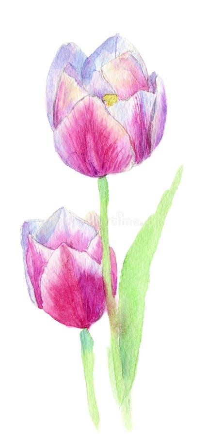 Due rose rosa-rosso fiori decorativi dell'acquerello illustrazione, foglia e germogli floreali Composizione botanica per nozze illustrazione vettoriale