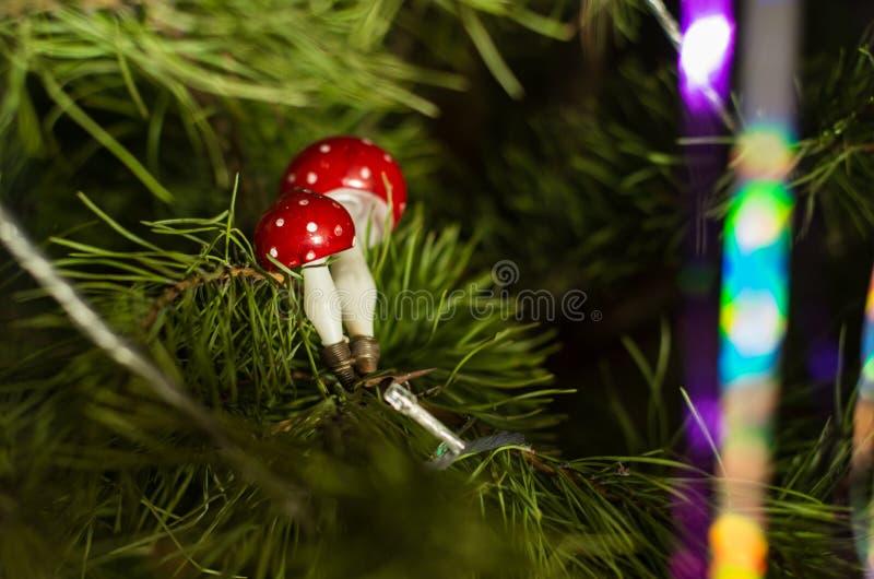Due rossi e funghi bianchi fotografie stock
