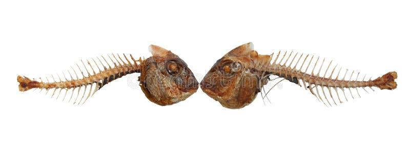 Due scheletri bacianti dei pesci immagini stock
