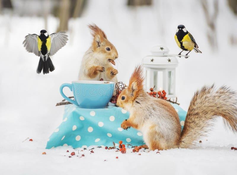 Due scoiattoli e mirtilli mangiano le nocciole e le tazze nella foresta dell'inverno fotografia stock libera da diritti