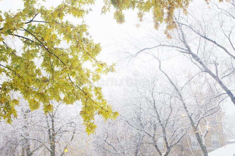 Due stagioni fotografie stock