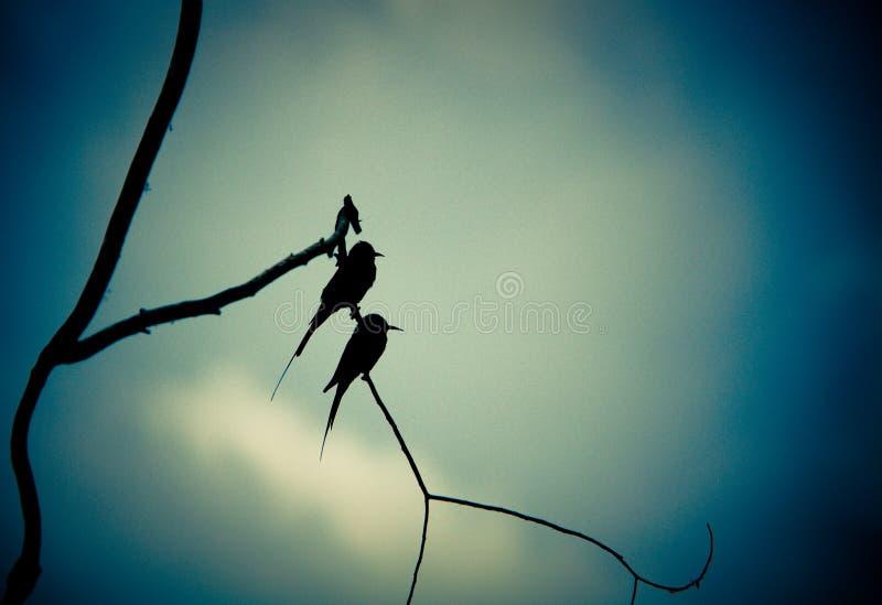 Due uccelli immagini stock