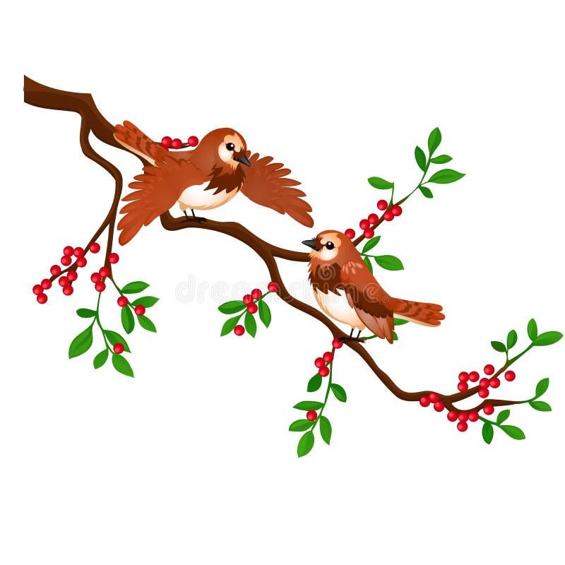 Due uccelli su un ramo con le bacche rosse isolate su fondo bianco Illustrazione del primo piano del fumetto di vettore illustrazione vettoriale