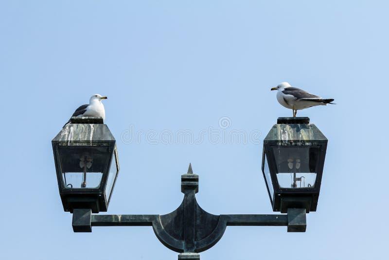 Due uccelli su una lampada di via fotografia stock libera da diritti