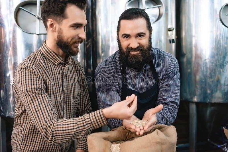 Due uomini barbuti adulti controllano la qualità di malto d'orzo mentre in fabbrica di birra Processo di fabbricazione della birr immagini stock